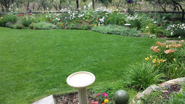 Well maintained yard and garden