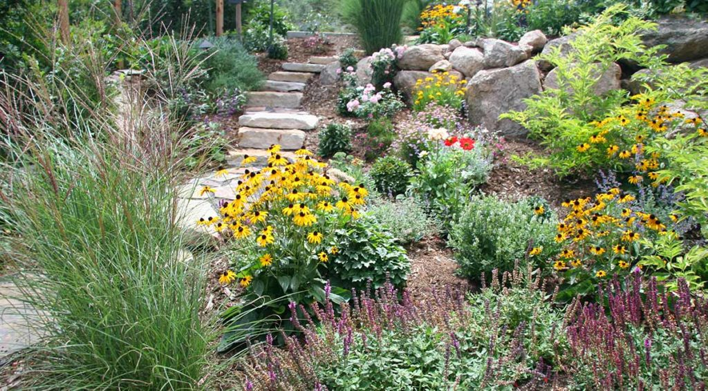 The plants featured in this garden space are all drought tolerant and well acclimated to Colorado Springs.